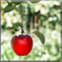 Eden-apple